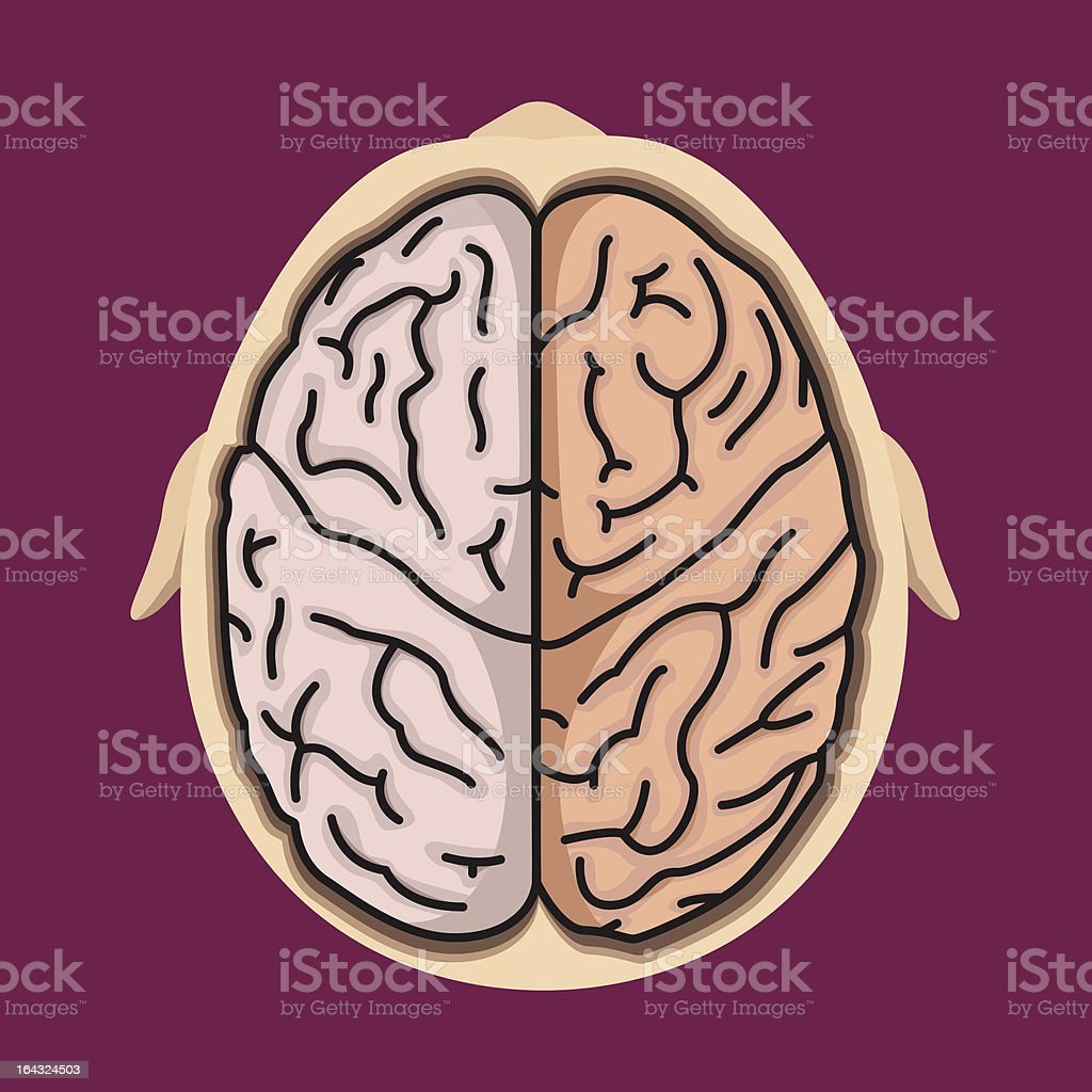 Brain system royalty-free stock vector art