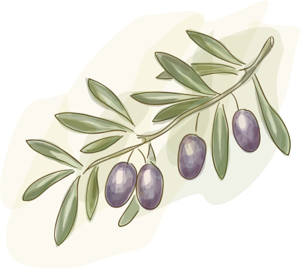 Branch of green olives.