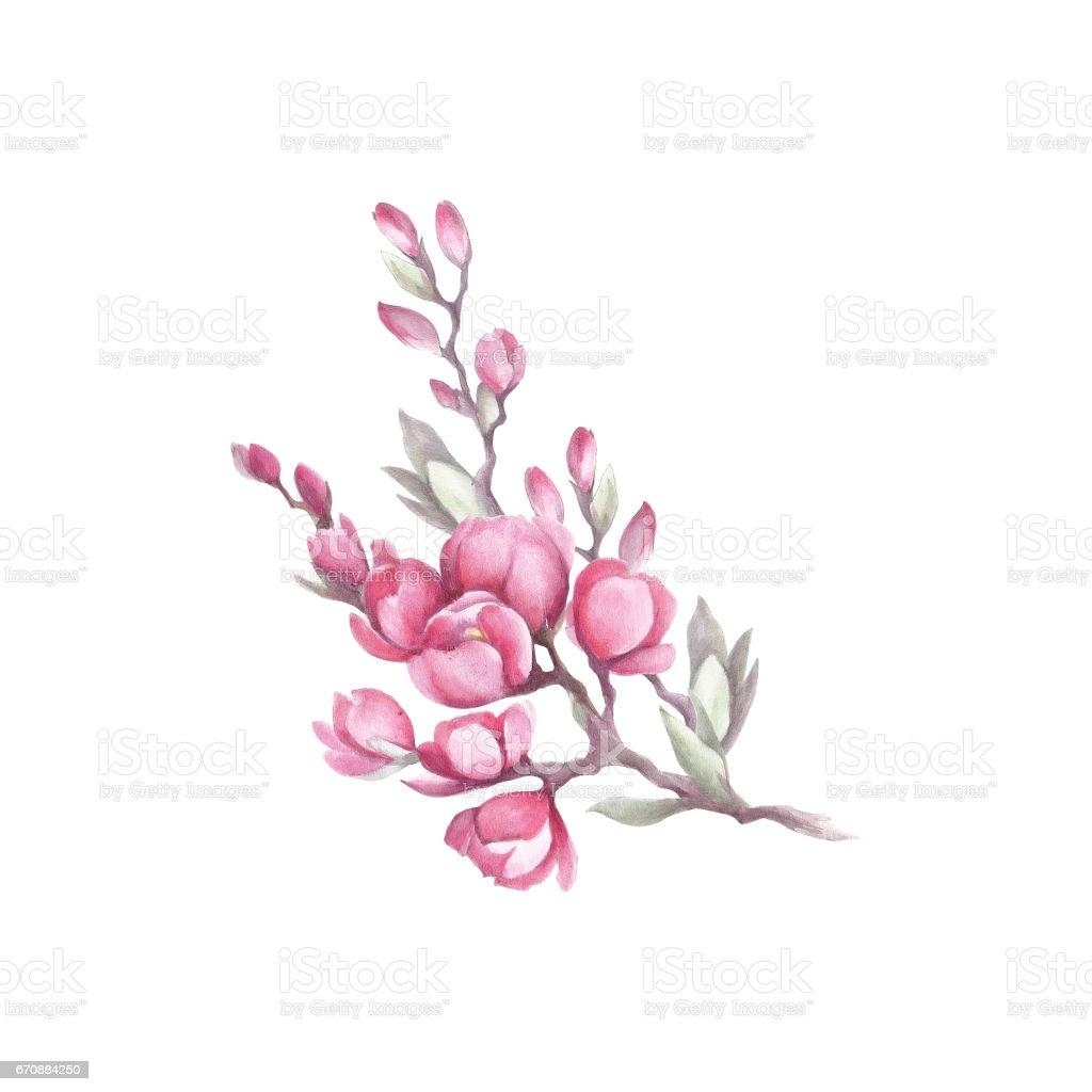 Branch of japanese quince hand draw watercolor illustration stock branch of japanese quince hand draw watercolor illustration royalty free branch of japanese quince biocorpaavc Image collections