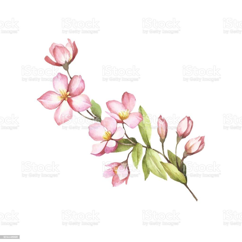 Vetores De Ramo De Flores De Sakura Mao Desenhar Ilustracao