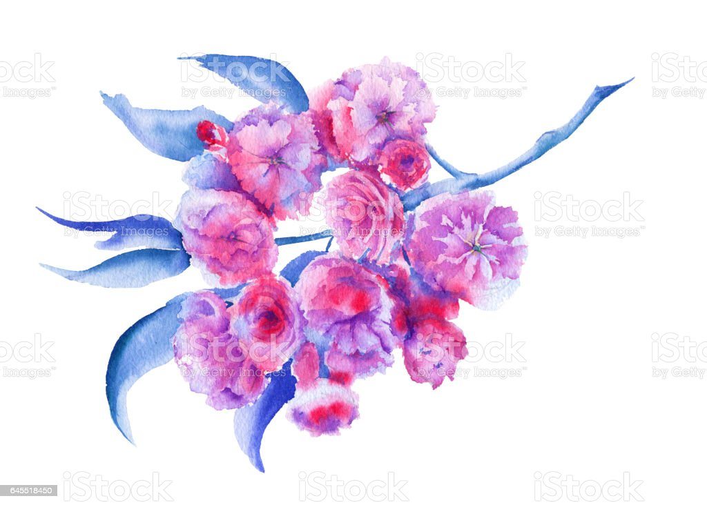 Branch with Sakura flower. Isolated on a white background. vector art illustration