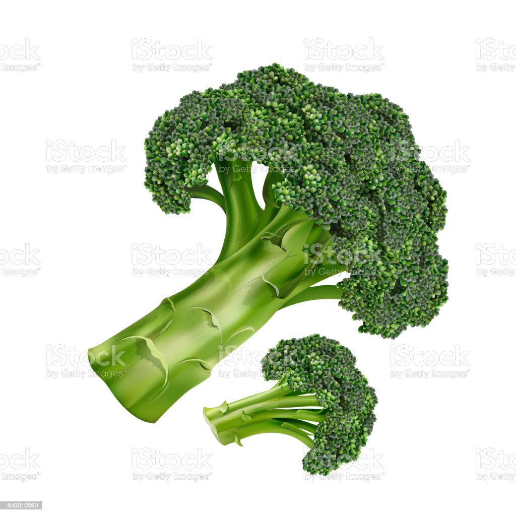 Brocoli sur fond blanc - Illustration vectorielle