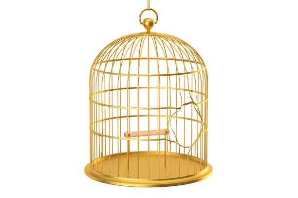 Broken golden bird cage, 3D rendering isolated on white background vector art illustration