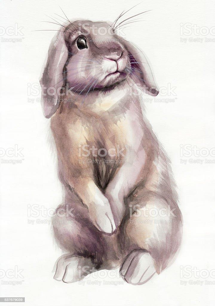 Brown rabbit watercolor painting vector art illustration