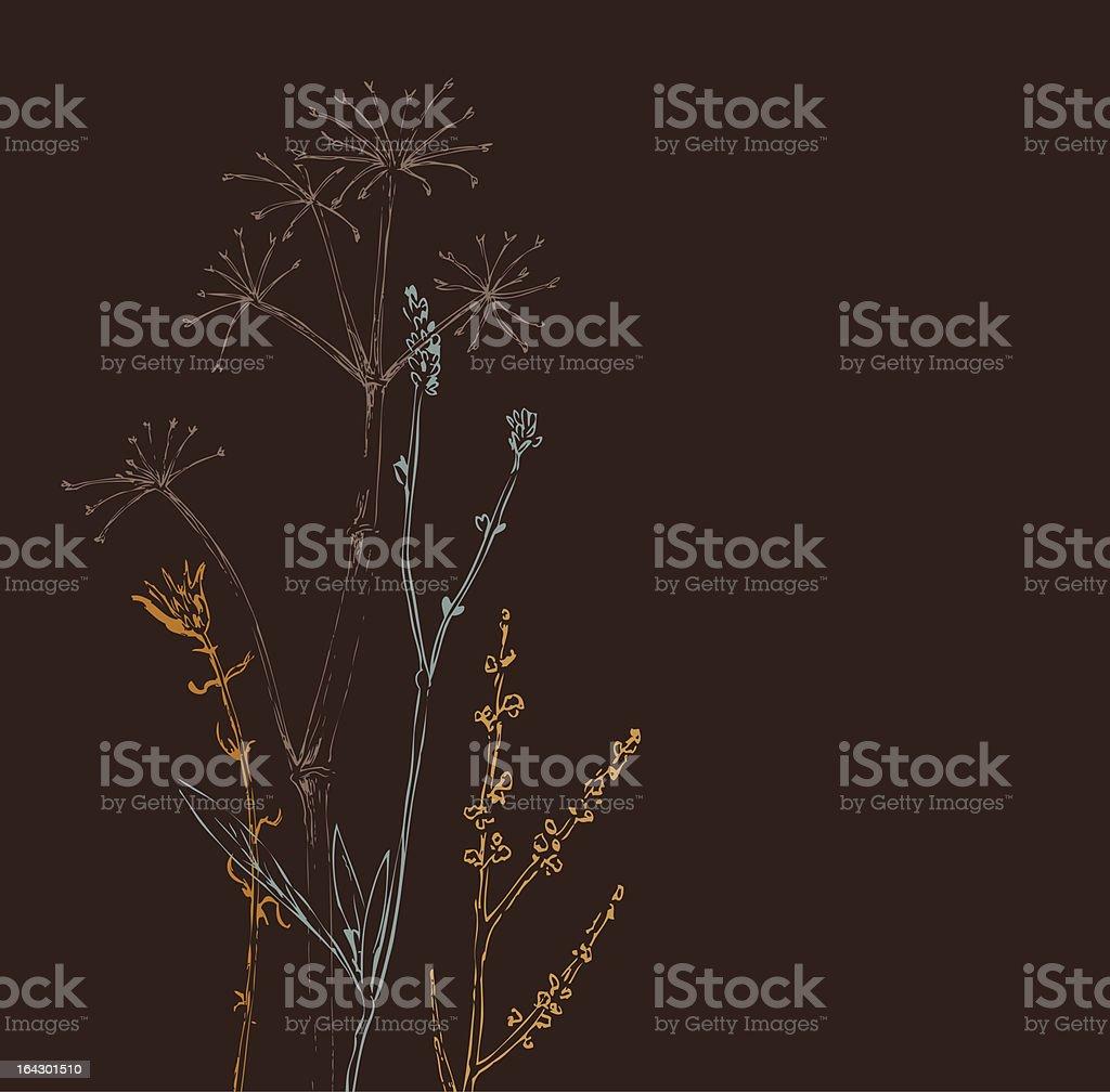 Brown Weeds_Herbal royalty-free stock vector art