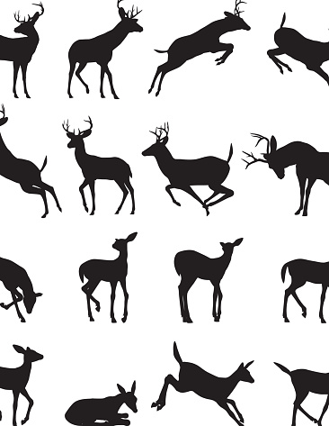 Buck silhouette