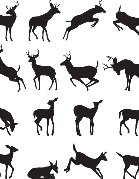 Buck silhouette  stag stock illustrations