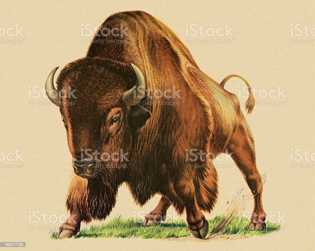 Buffalo royalty-free buffalo stock vector art & more images of american bison