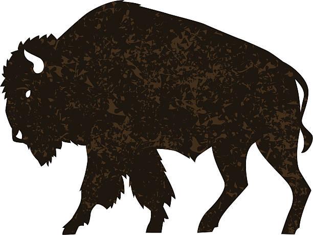 buffalo illustration of a buffalo with distress pattern american bison stock illustrations
