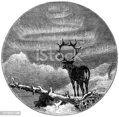 A bull elk under the Aurora Borealis. Vintage etching circa late 19th century.