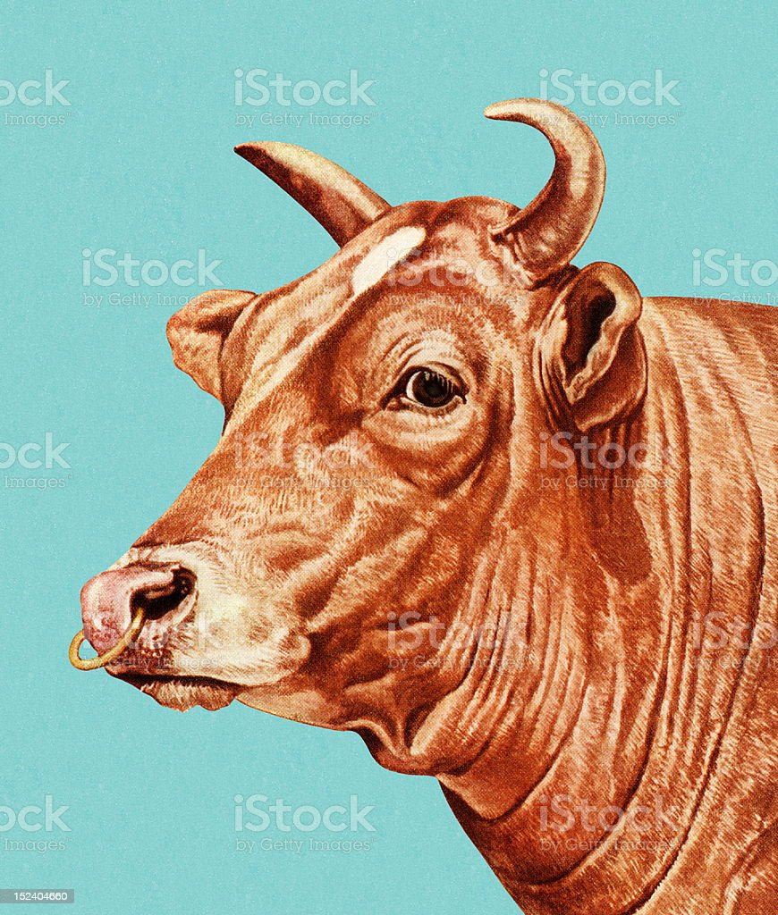 Bull with Nose Ring vector art illustration