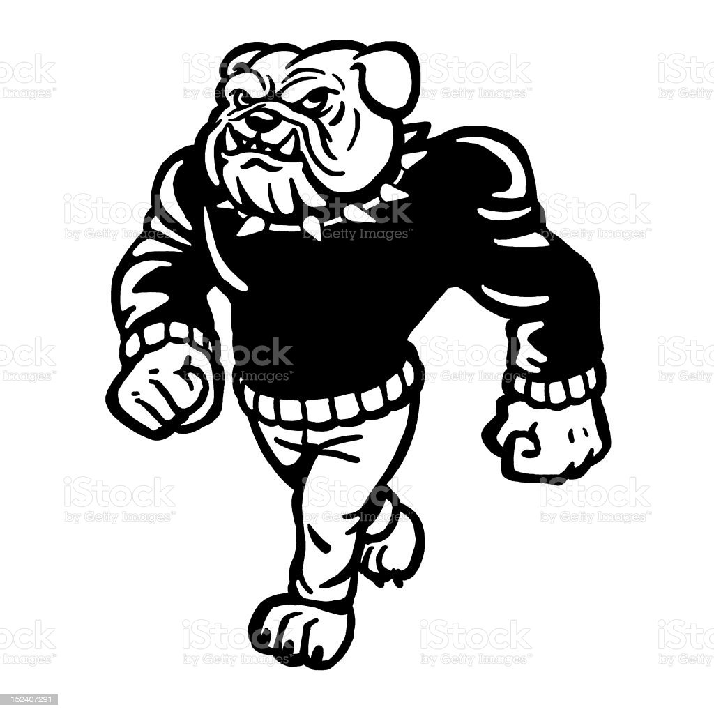 Bulldog Wearing Sweater royalty-free stock vector art