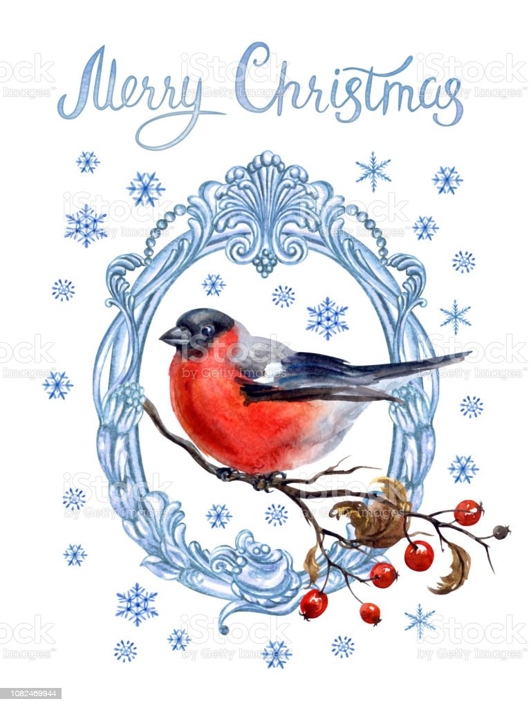Bullfinch On A Branch In A Patterned Frame Christmas Card Stock
