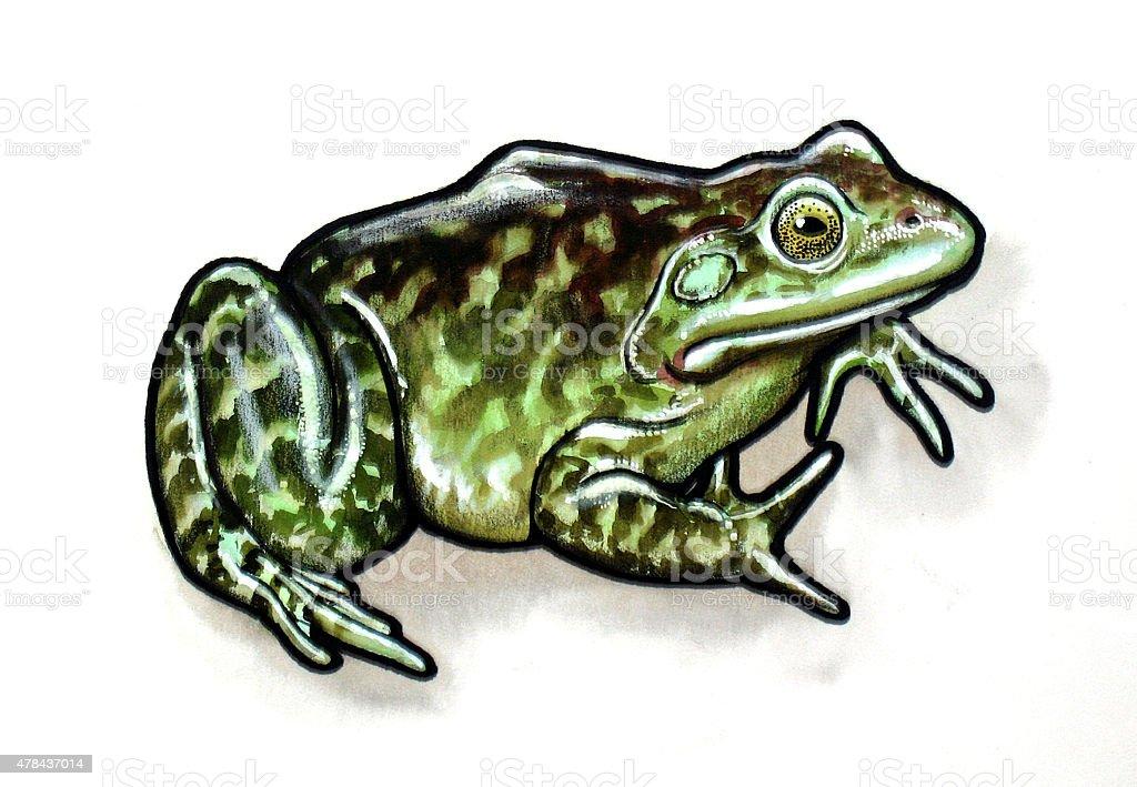 royalty free bullfrog clip art vector images illustrations istock rh istockphoto com bullfrog clipart images bullfrog clipart free