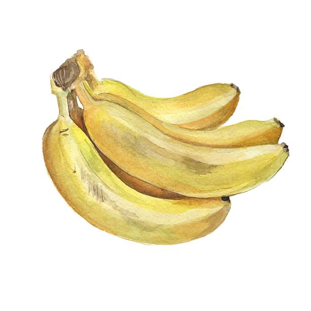 Bunch of bananas. Isolated on white background vector art illustration