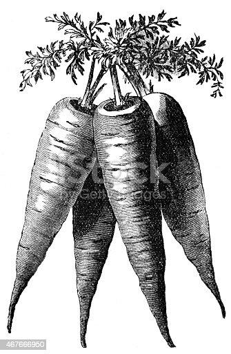 istock bunch of carrot 467666950