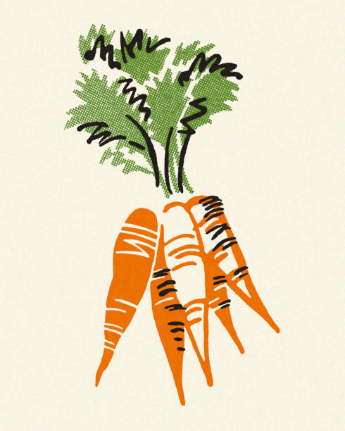 bunch of carrots - root vegetable stock illustrations