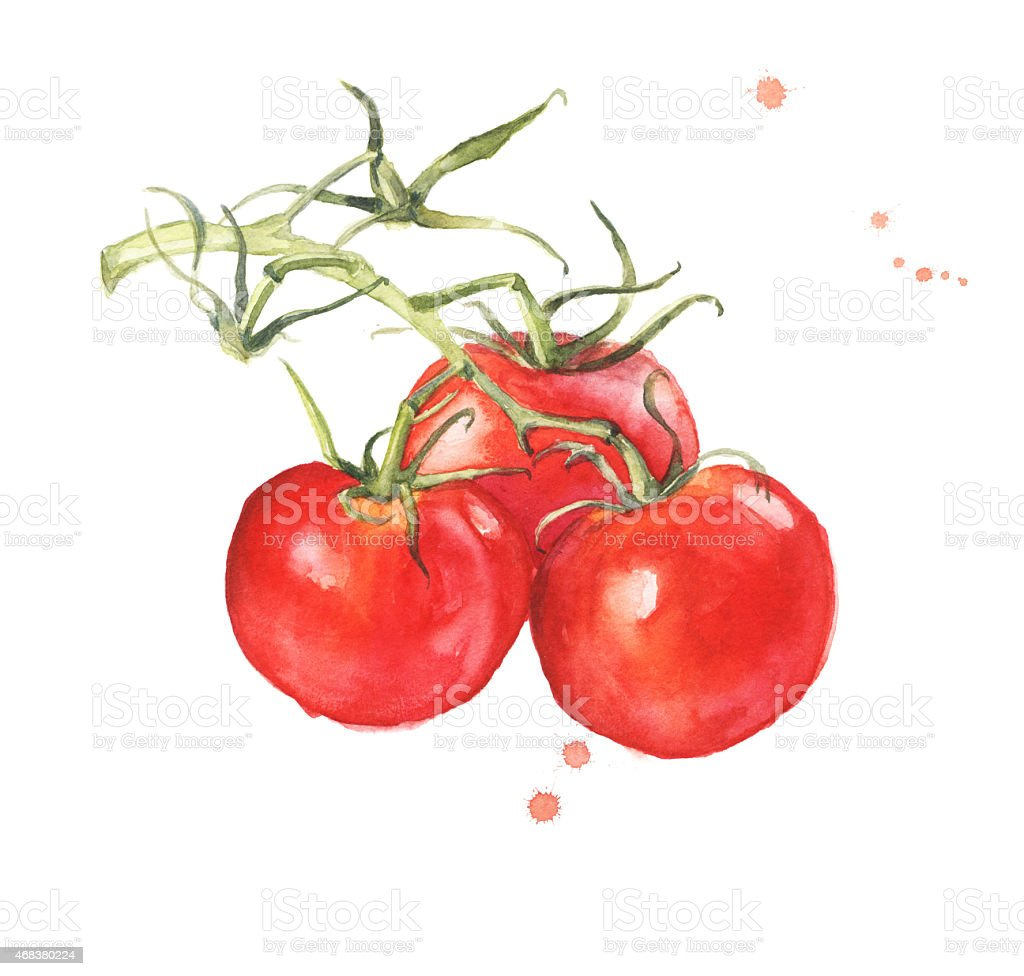 Bunch of fresh tomatoes vector art illustration