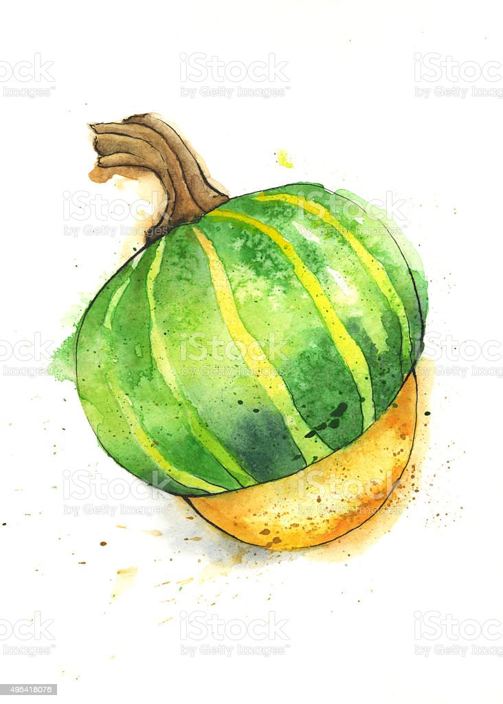 Buttercup Squash Painted in Watercolor vector art illustration