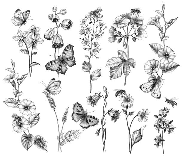 illustrazioni stock, clip art, cartoni animati e icone di tendenza di butterflies, bees and wildflowers isolated on white - impollinazione