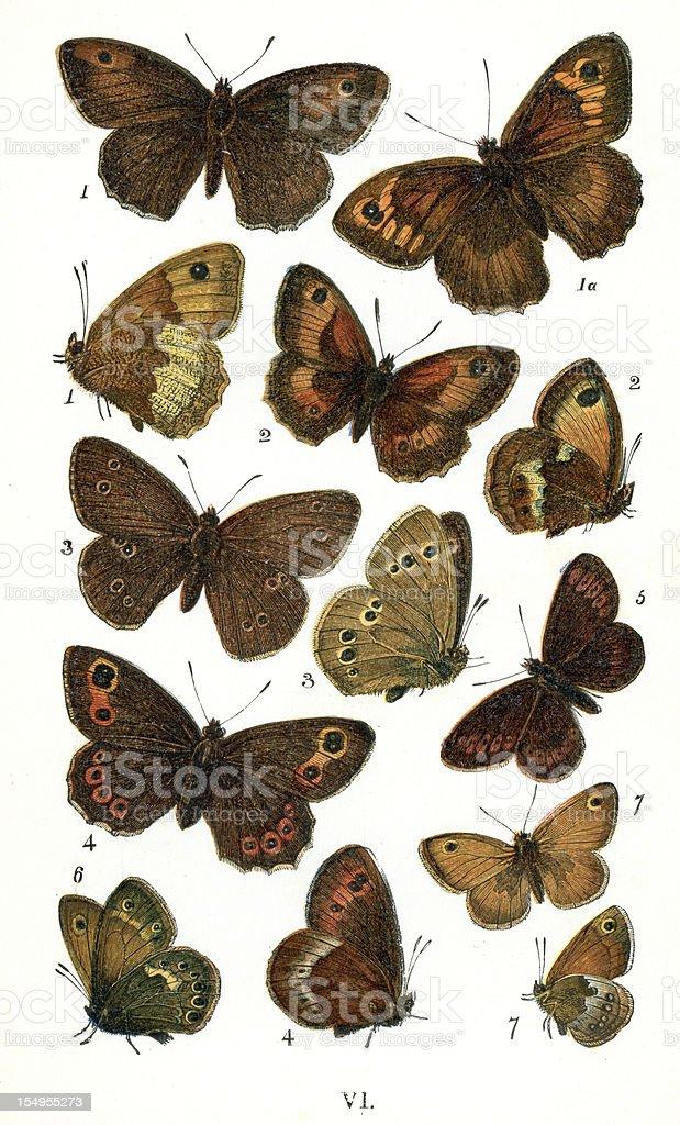 Butterflies vector art illustration