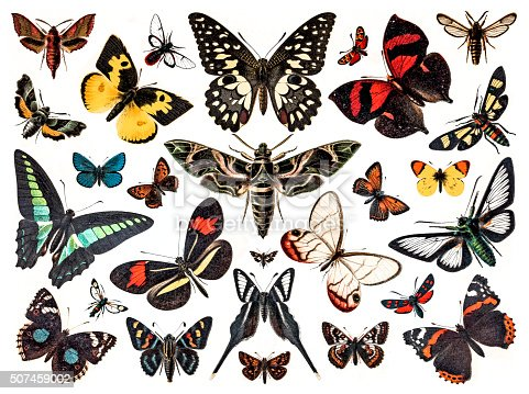 Antique illustration of various butterflies