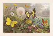 istock Butterflies on a meadow, chromolithograph, published in 1884 1224997602