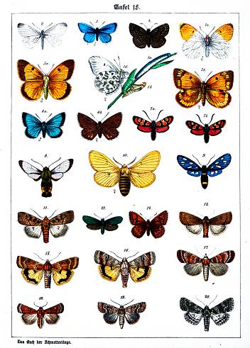 Color Illustration from 19th century: 1. Anthocharis cardamines 2. Leucophasia sinapis 3. Lycaena argiades 4. Nisoniades Tages 5. colias edusa 6. Lycaena damon 7. Zygaena carniolica 8. Macroglossa fuciformis 9. Syntomis Phegea 10. Crateronyx taraxaci 11. Agrotis ditrapezium 12. Amphipyra tragopogonis 13. Ino globulariae 14. Nemeobius lucina 15. Agrotis orbona 16. Agrotis comes 17. Agrotis baja 18. Agrotis xanthographa 19. Agrotis festiva 20. Polia polymita
