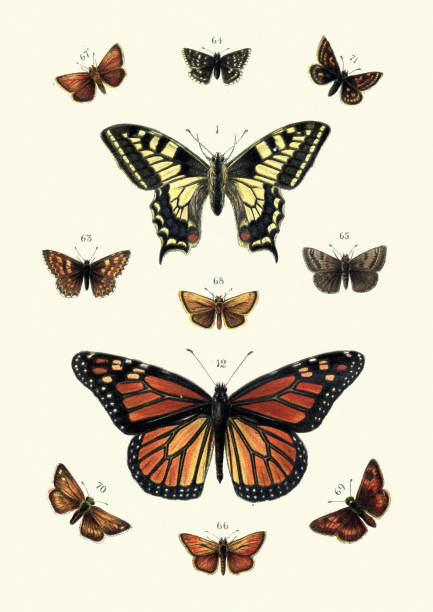 Butterflies, Swallow tail butterfly and Black veined brown, Skippers vector art illustration
