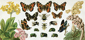 Butterfly and Carpenter Bee Beetle\nOriginal edition from my own archives\nSource : \