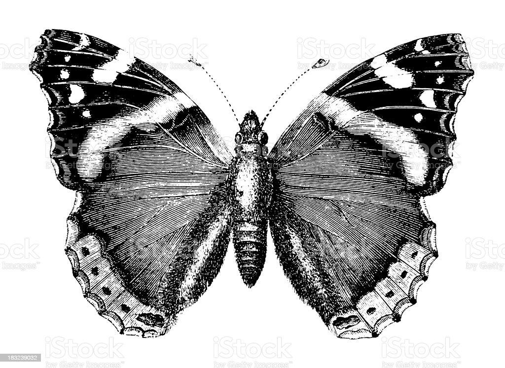Butterfly | Antique Animal Illustrations vector art illustration