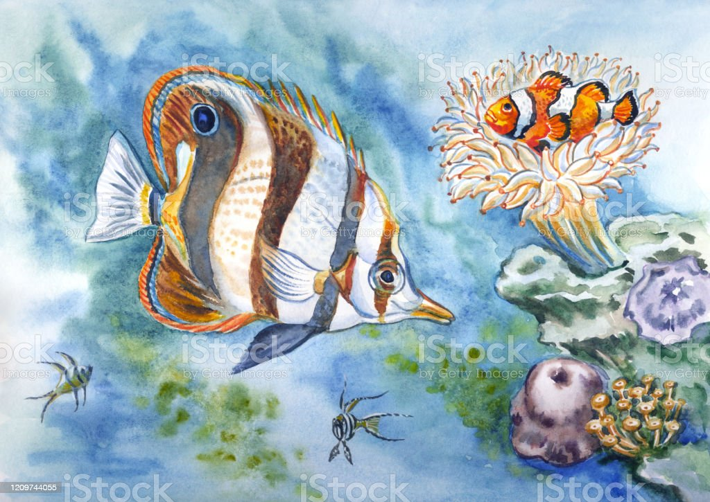 Butterfly Fish And Clown Fish Stock Illustration Download Image Now Istock