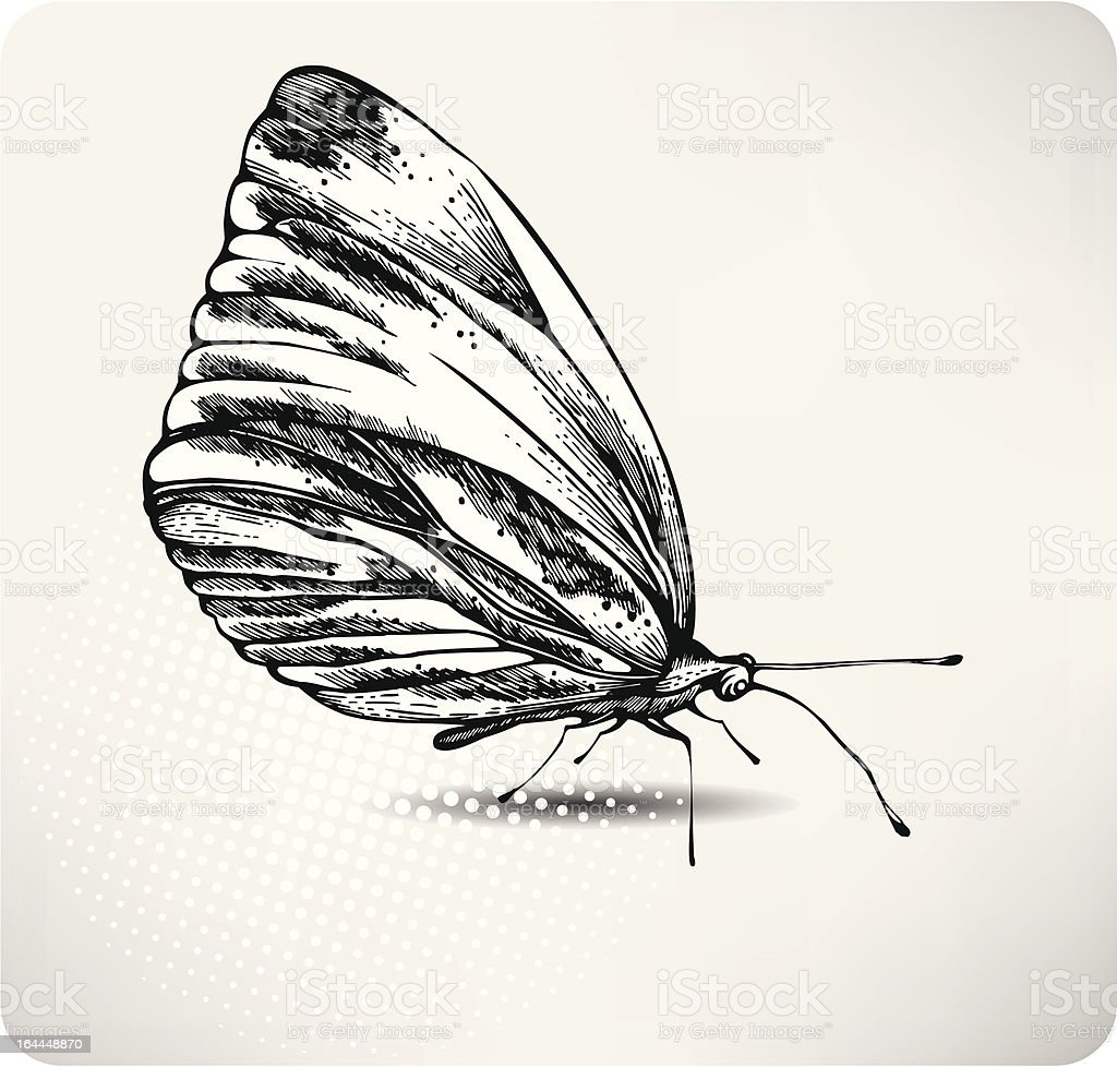 Butterfly hand drawing. Vector vector art illustration