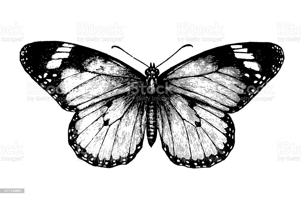 Butterfly royalty-free butterfly stock vector art & more images of 19th century