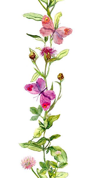 ilustrações, clipart, desenhos animados e ícones de borboleta na meadow ervas. aquarela. fronteira de listras sem - bordas florais