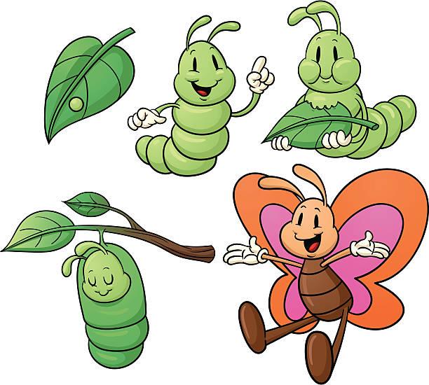stockillustraties, clipart, cartoons en iconen met butterfly life cycle. - rups