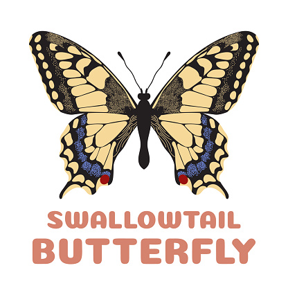 Butterfly Papilio machaon flashcard. Swallowtail. illustration for kids education and child reading skills development. Sight Words Flash Cards For children to learn read and spell.