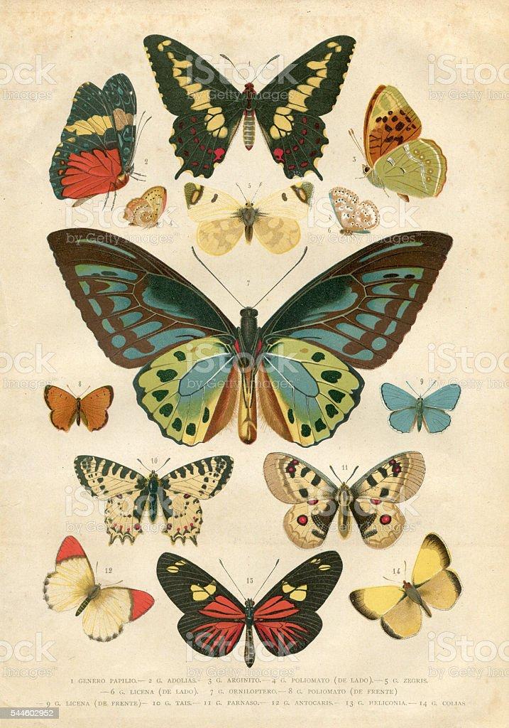 Butterfly Papilio Nymphalidae illustration 1881 vector art illustration