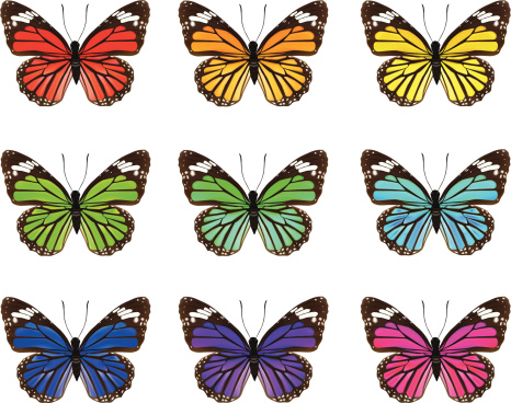 Butterfly's-Vector Illustration