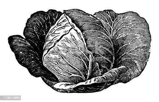 istock Cabbage 173824889