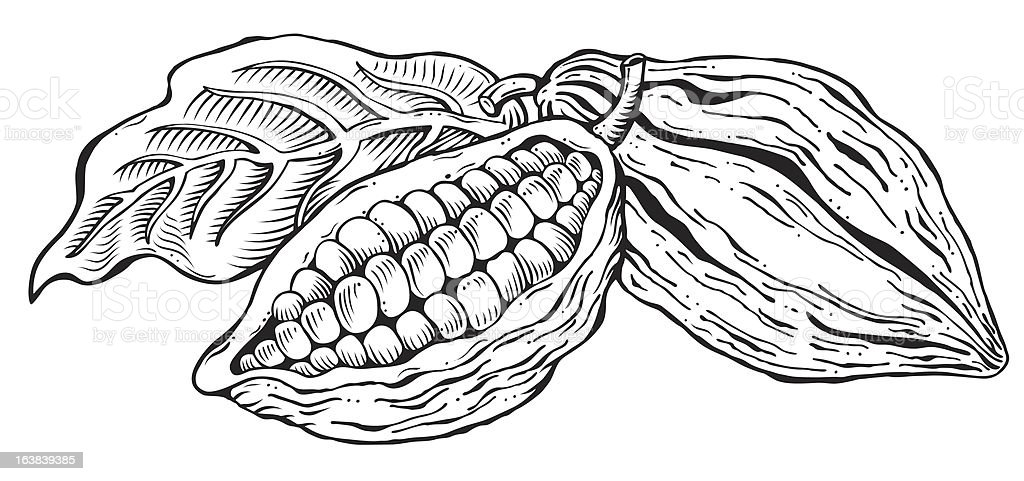 Cacao beans vector art illustration