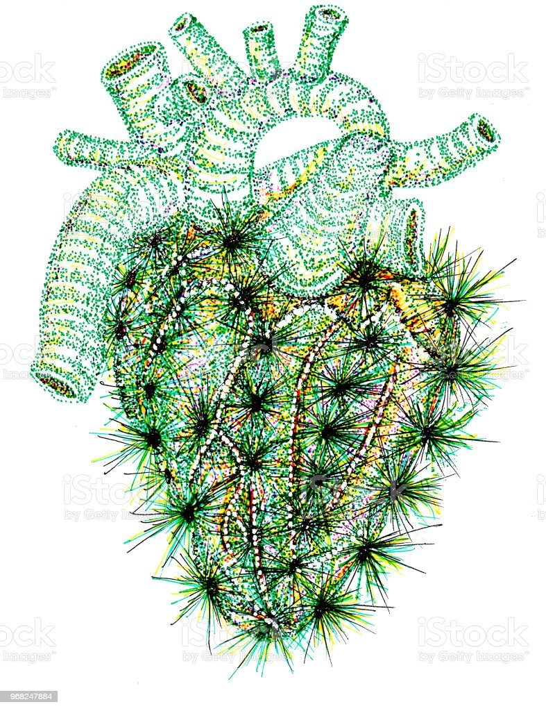 Cacti Anatomical Heart With Cactus Spines Stock Vector Art & More ...
