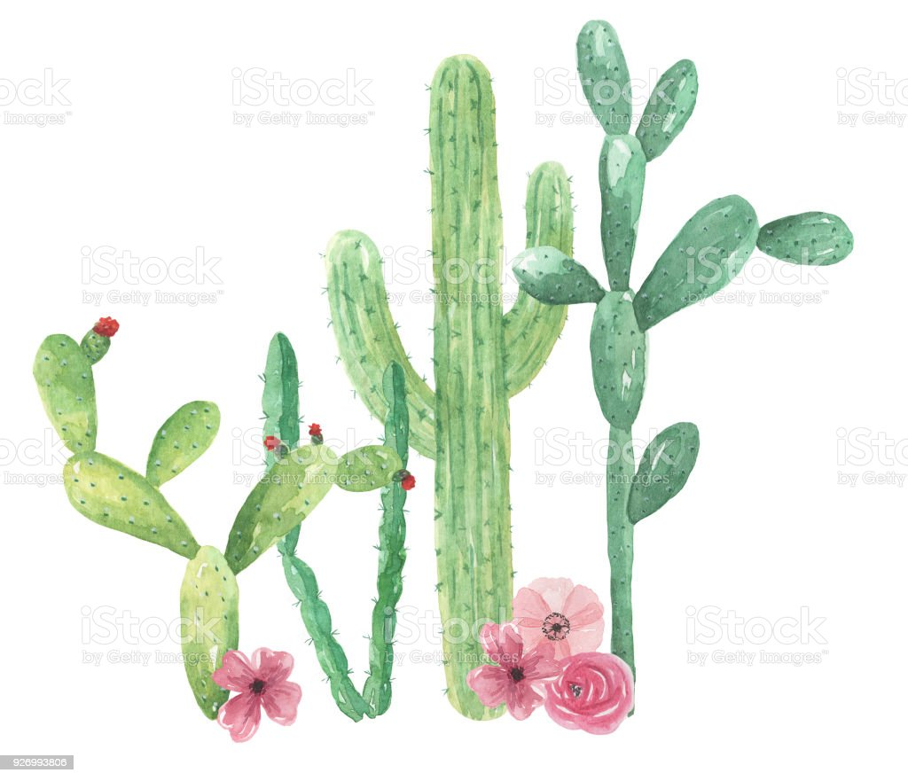 Cacti Watercolor Cactus Pink Flowers Mexico Arrangements Stock