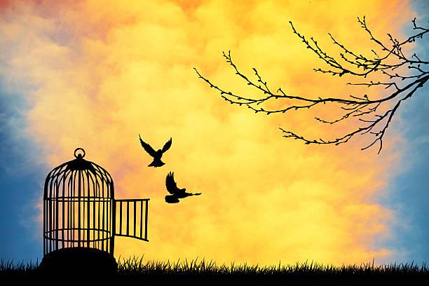 Αποτέλεσμα εικόνας για cage free birds