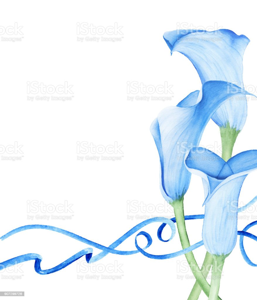 Bouquet de Lys Calla. Illustration aquarelle - Illustration vectorielle