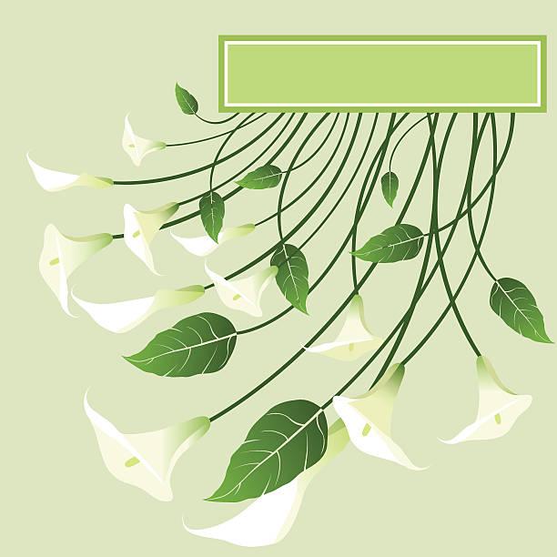 Callas. illustration vectorielle. - Illustration vectorielle