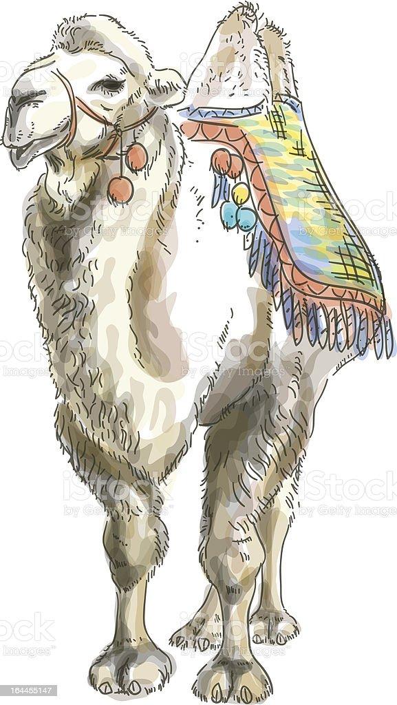 Camel Bactrian. royalty-free stock vector art