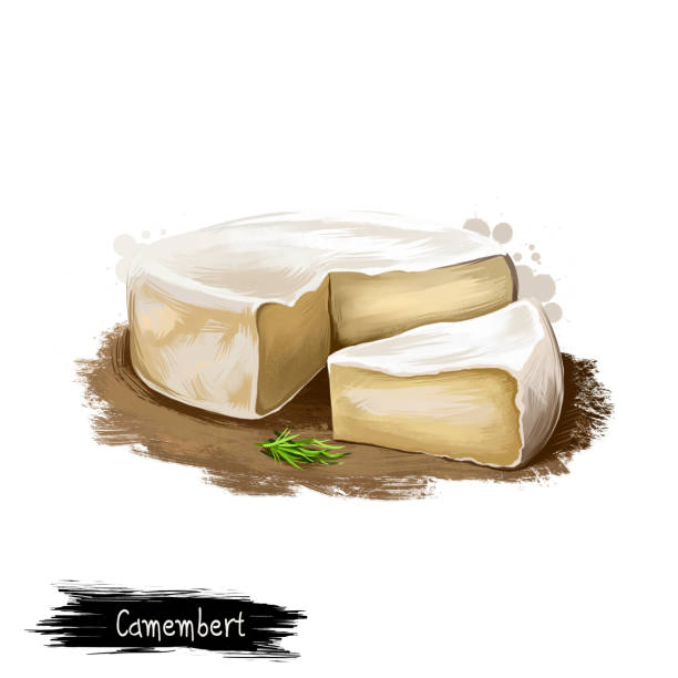 illustrazioni stock, clip art, cartoni animati e icone di tendenza di camembert cheese with rosemary digital art illustration isolated on white background. fresh dairy product, healthy organic food in realistic design. delicious appetizer, gourmet snack italian meal - formare pane