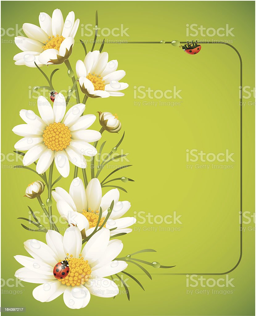 Camomile frame vector art illustration
