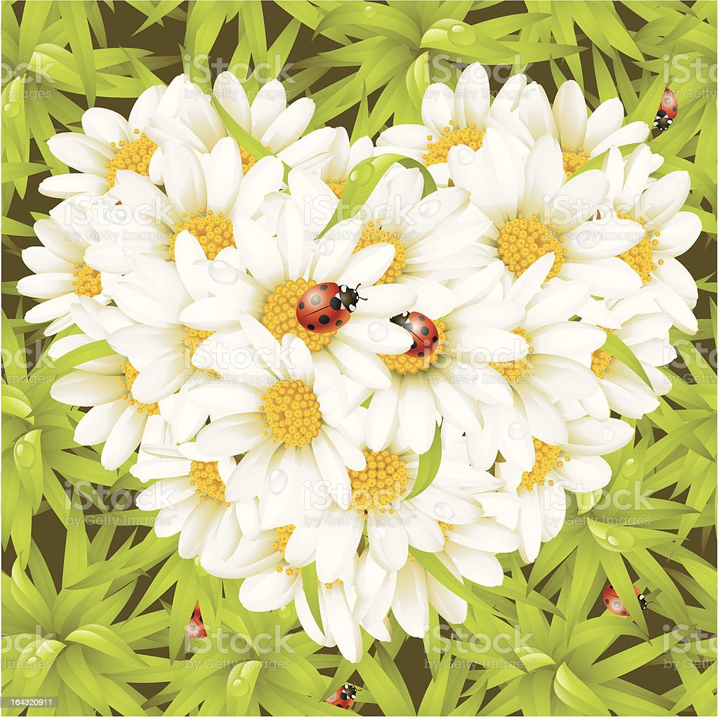 Camomile Heart, ladybugs and seamless background vector art illustration